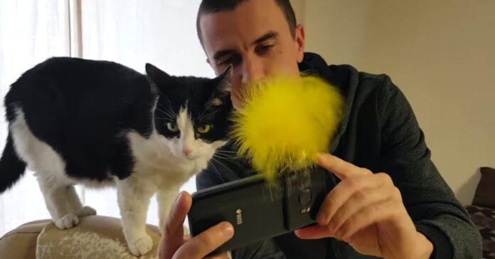 Padrone ha un trucco per scattare selfie con il gatto