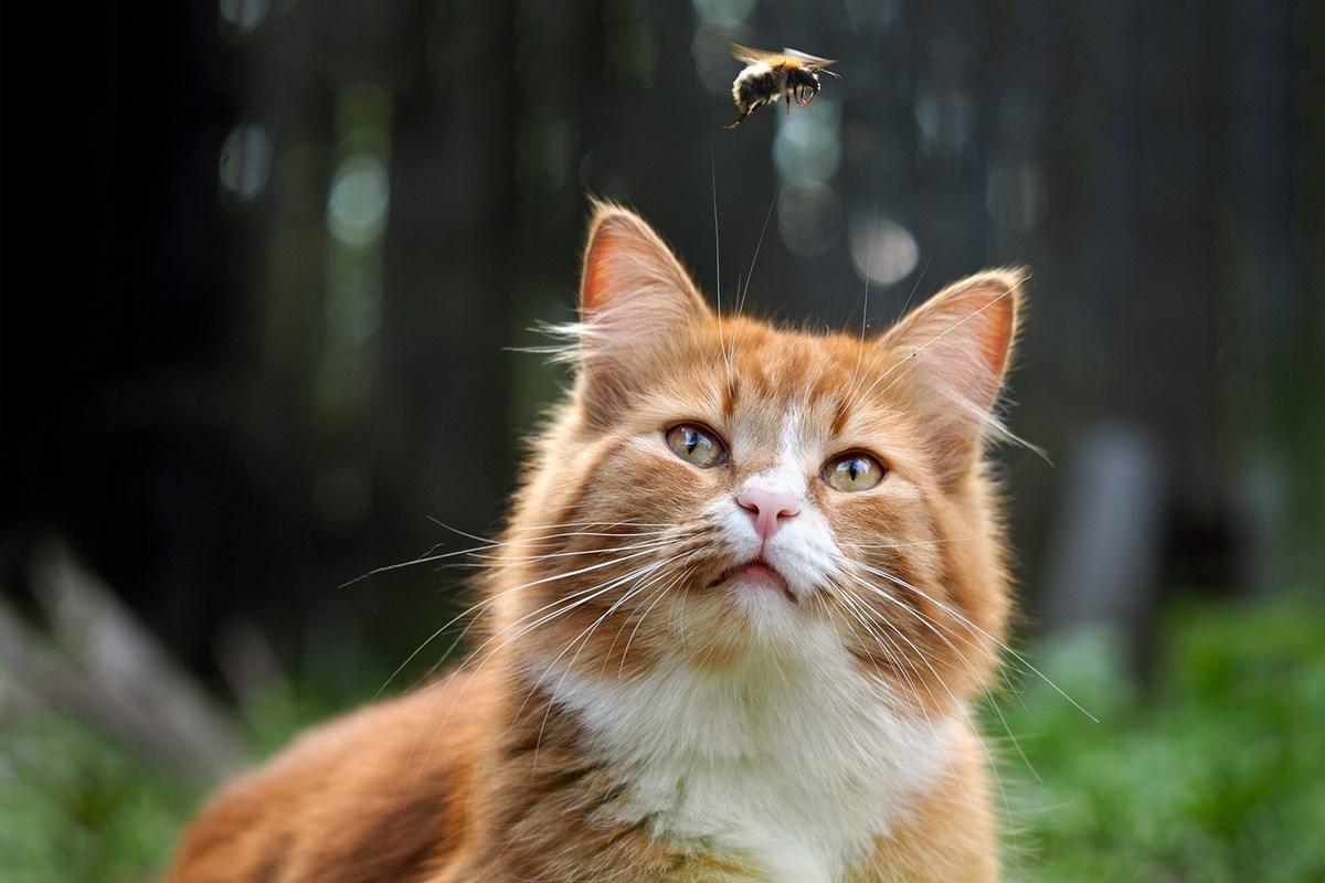 gatto che guarda un'ape