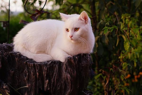 sindrome occhio secco del gatto