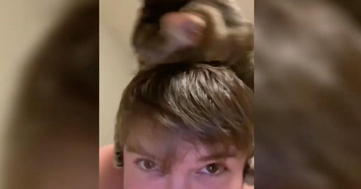 gatto sulla testa del padrone coccole