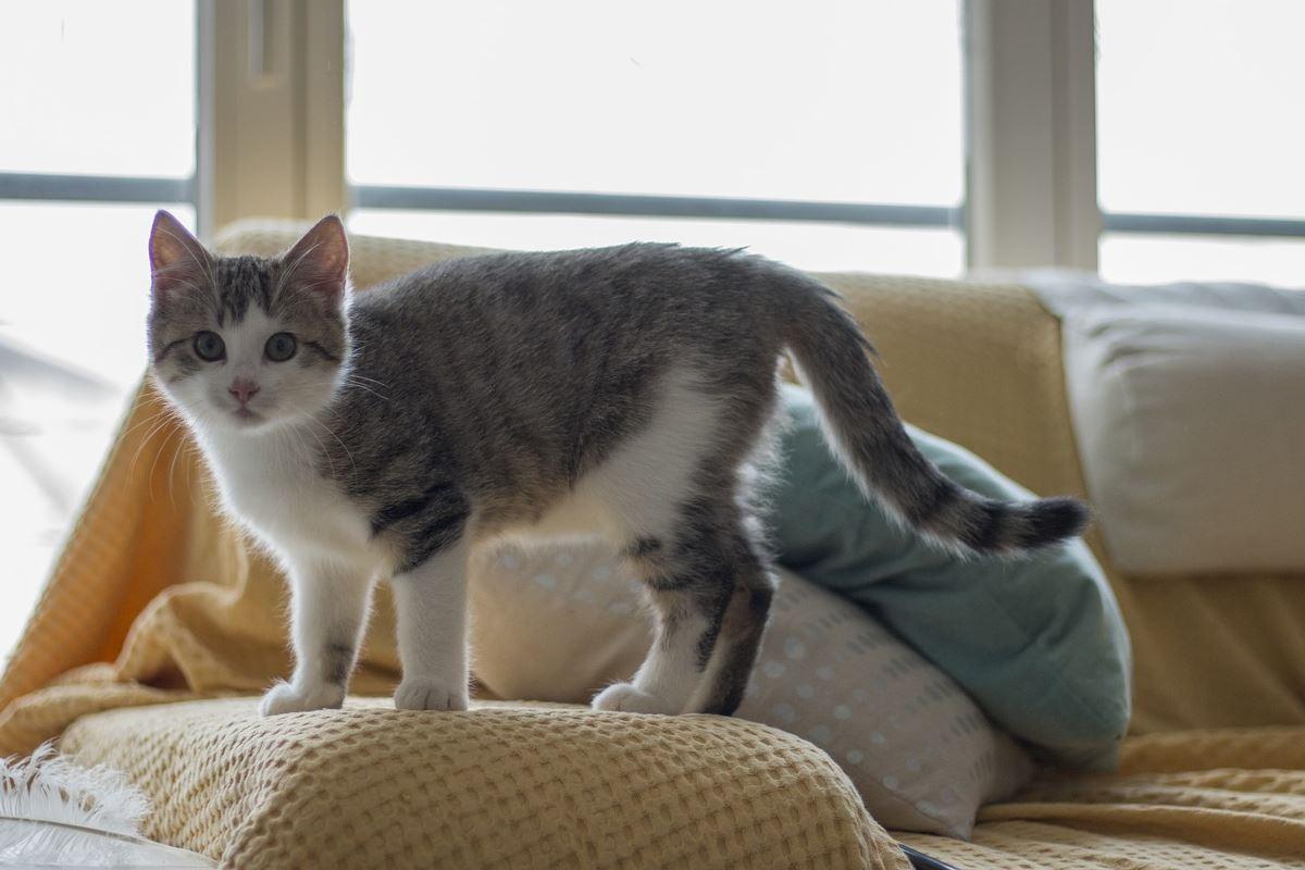 gattino che sale sul divano