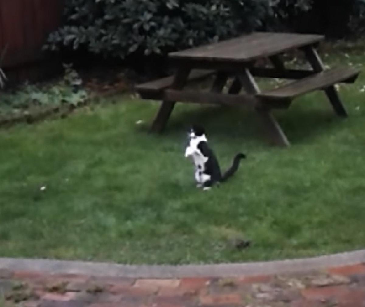 cosmos gattino catturare pioggia unico vero desiderio