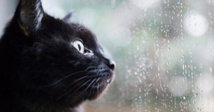 gattino europeo esce giardino e cerca catturare pioggia