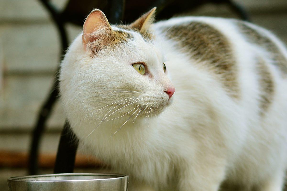 gatto con ciotola di metallo