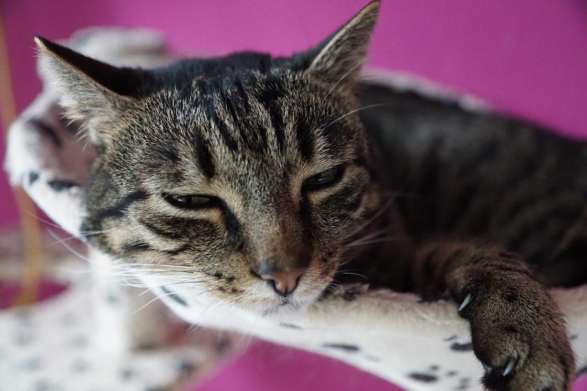 gatto che dorme sul suo lettino