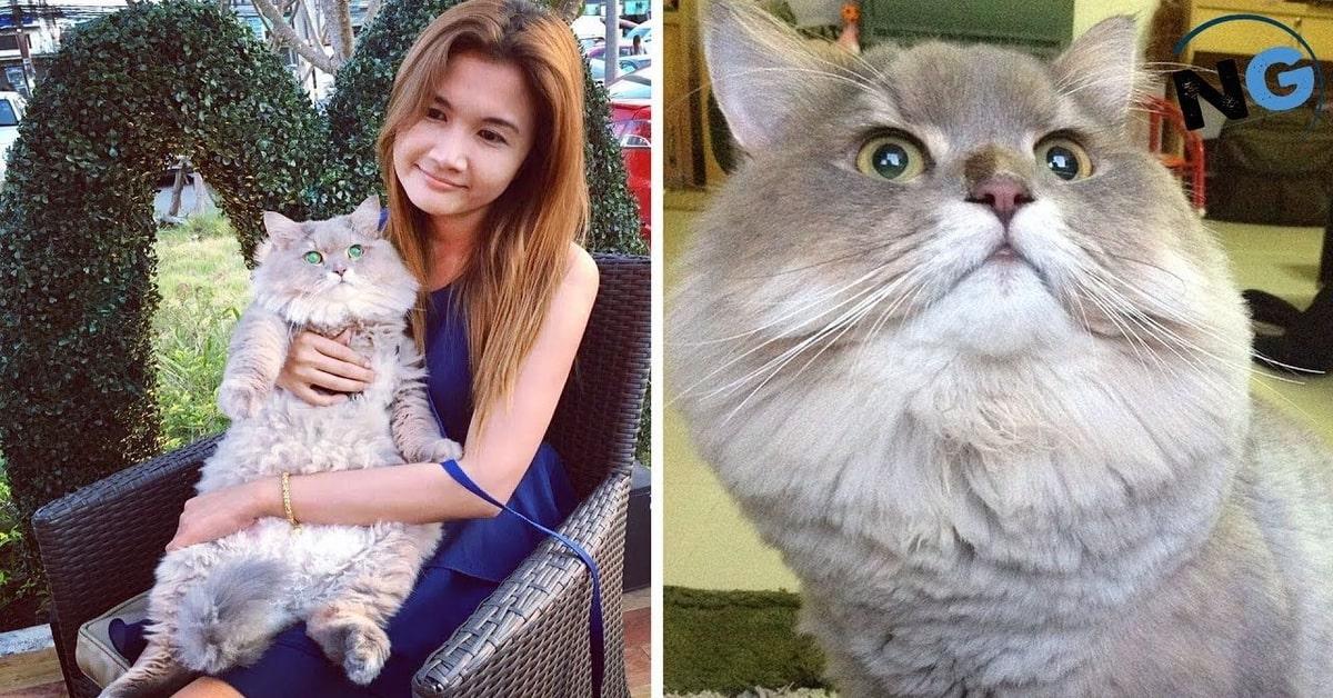 due foto di Bone Bone gatto star del web