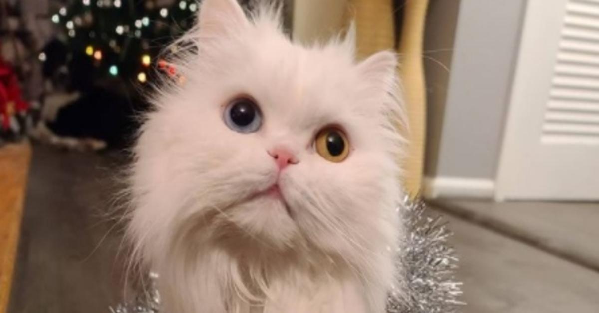 Clarabelle gattina sorda video