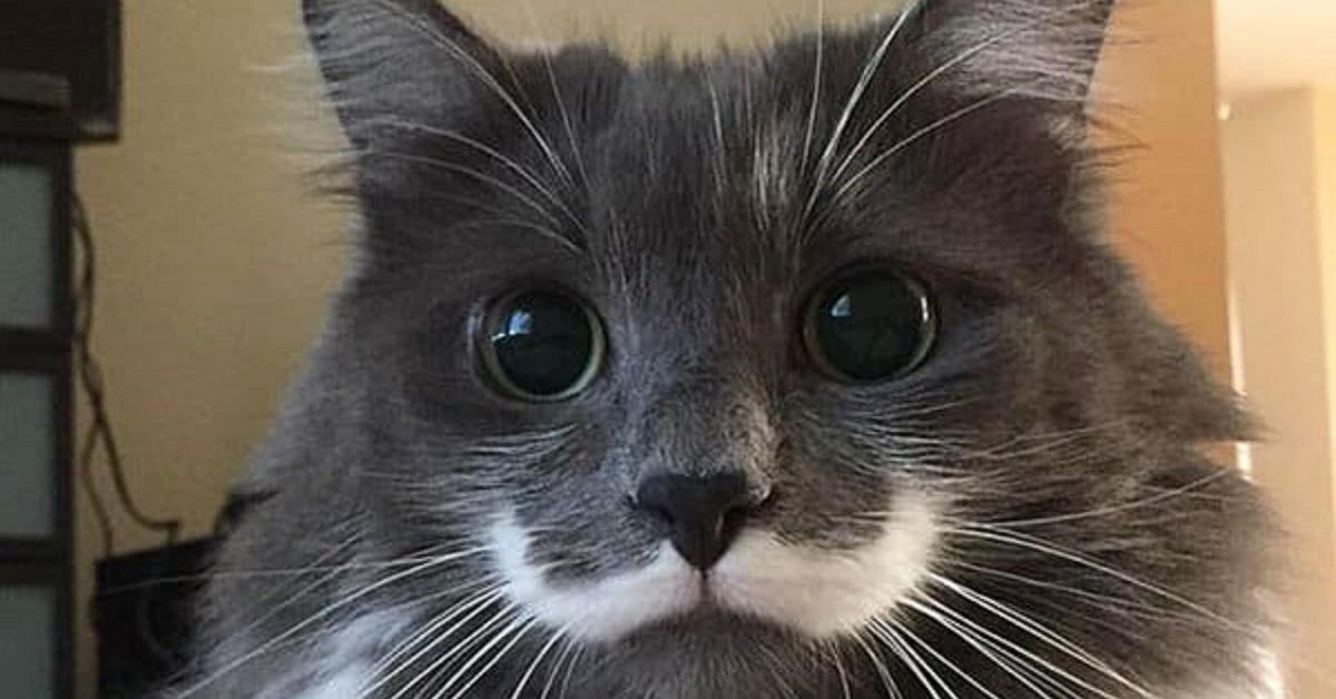 Gatto con baffi
