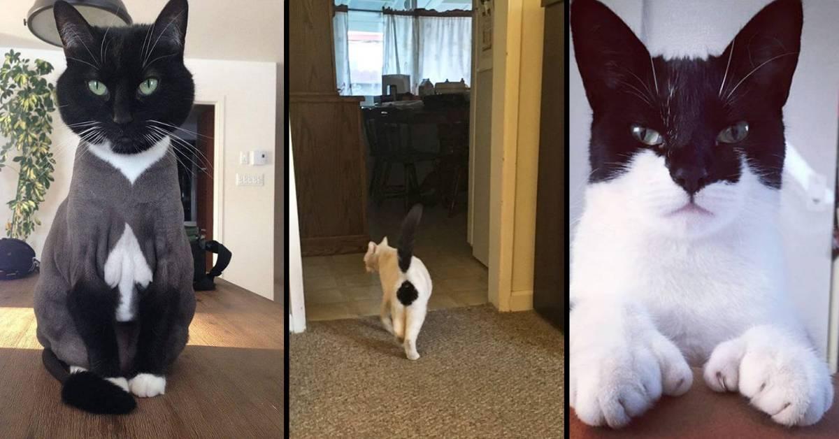 Gatti con macchie particolari