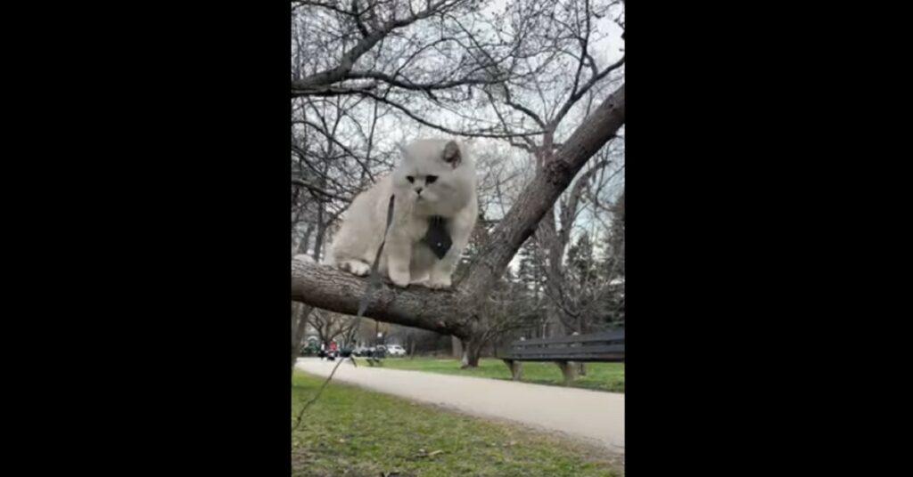 Gattino British shorthair che passeggia su un albero