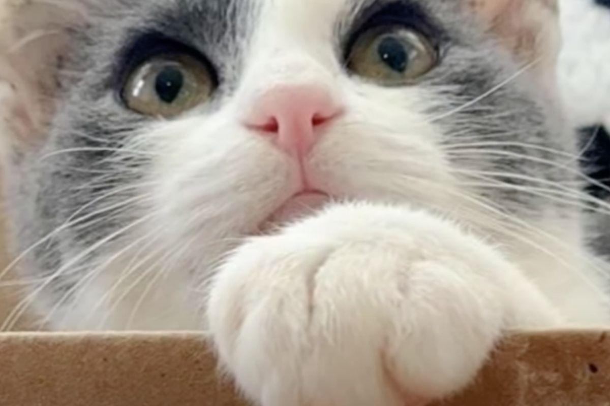 gattino randagio salvato