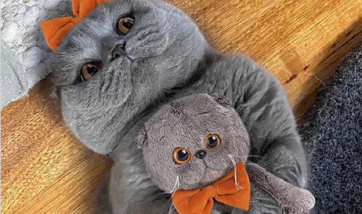 I gatti che ci hanno fatto più ridere- Gatto con pupazzo