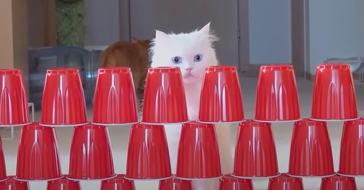 Gatto salta bicchieri
