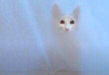 Gatto sfida un muro di carta