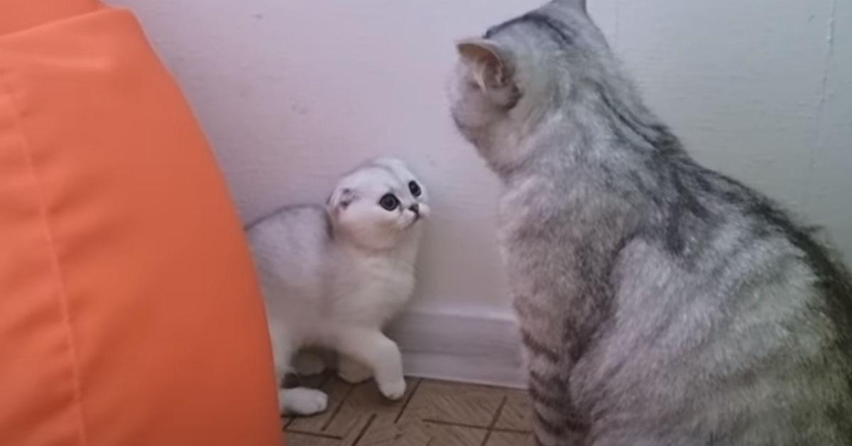 Gattino con il papà