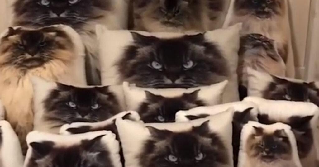 Gatto tra i cuscini