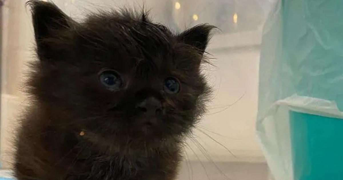 Koda gattino copertina video