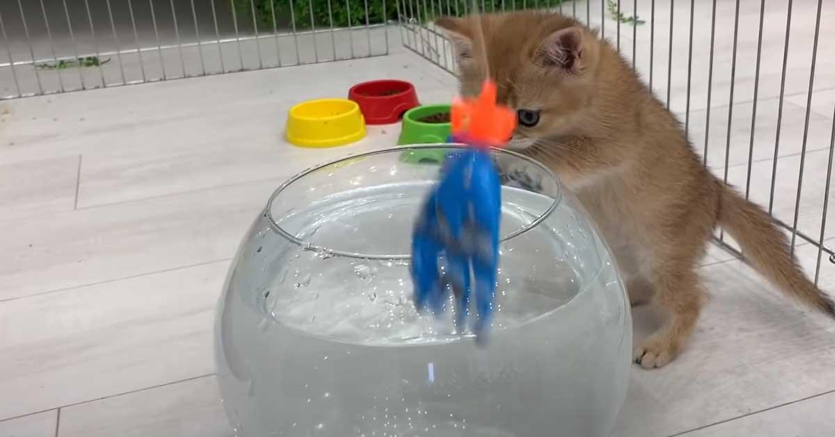 Gatto osserva una boccia di pesci