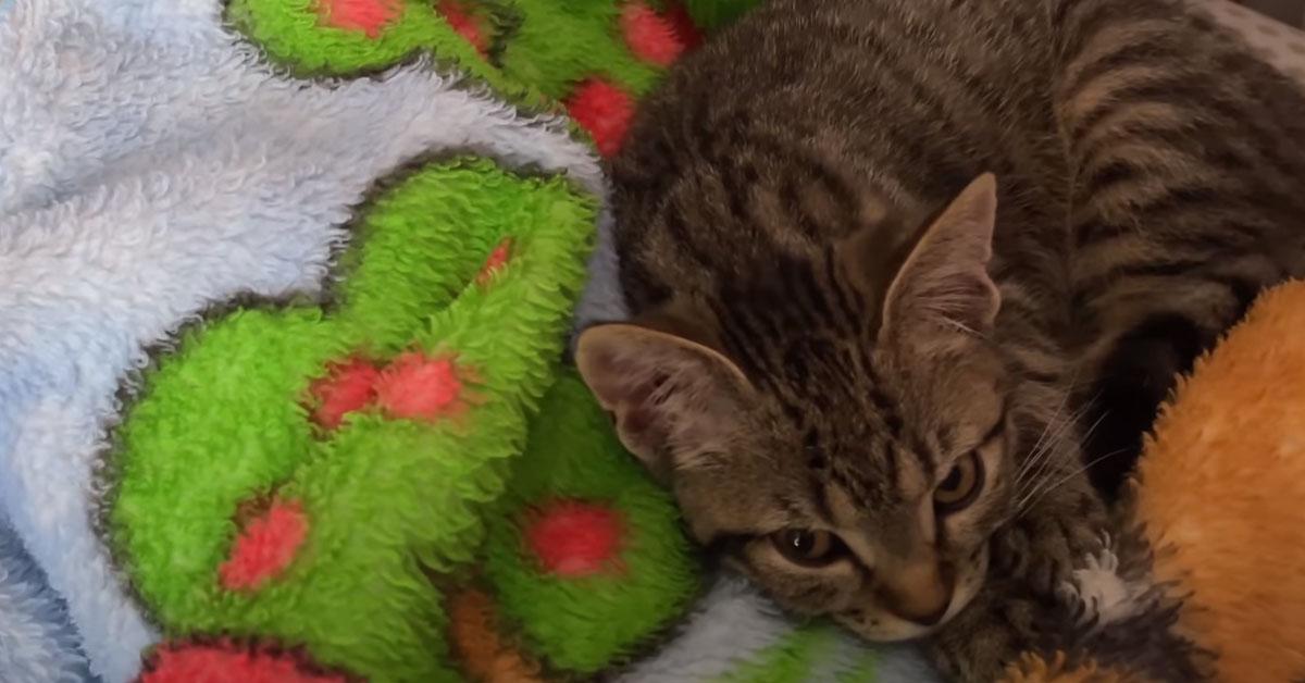 Gatto in un letto
