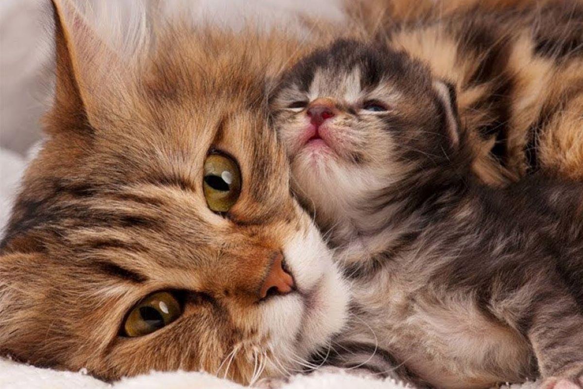 il gattino si arrabbia se lo tocchi