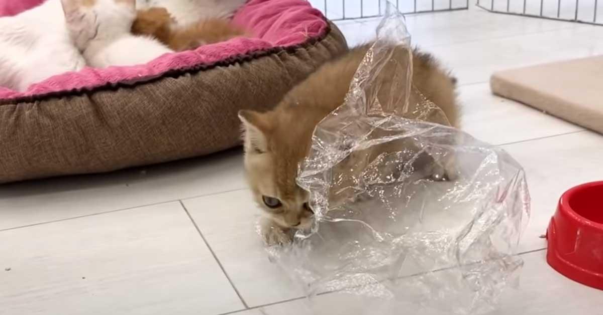 Gattino che gioca