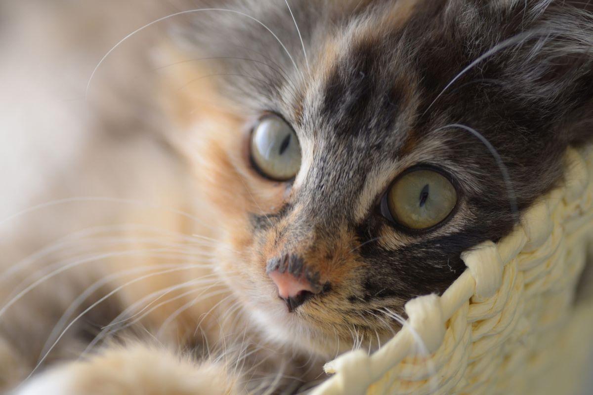 il gattino si insegue la coda