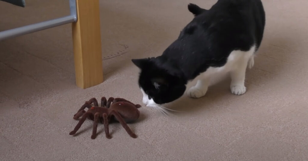 Gatto contro un ragno finto