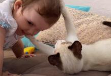 Gatto gioca con un bambina