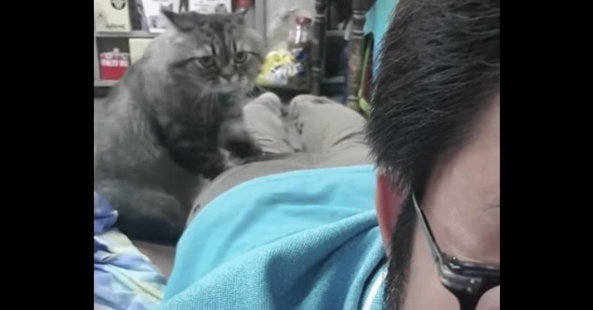 la tecnica di un gatto per fare ottimi massaggi