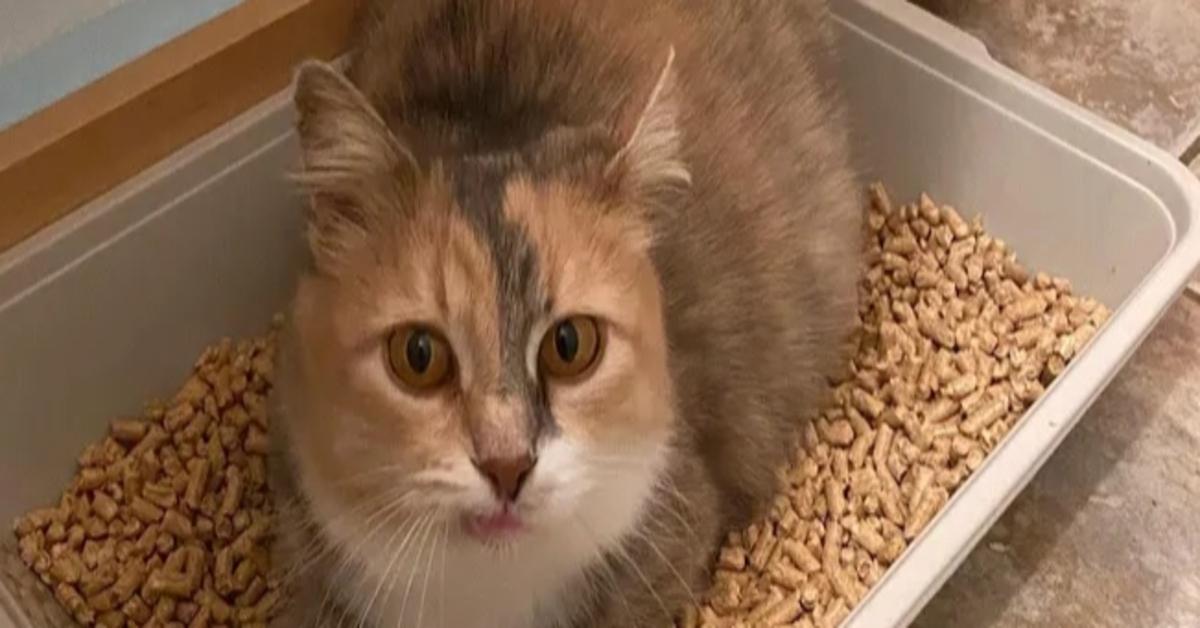 Priscilla gattina video