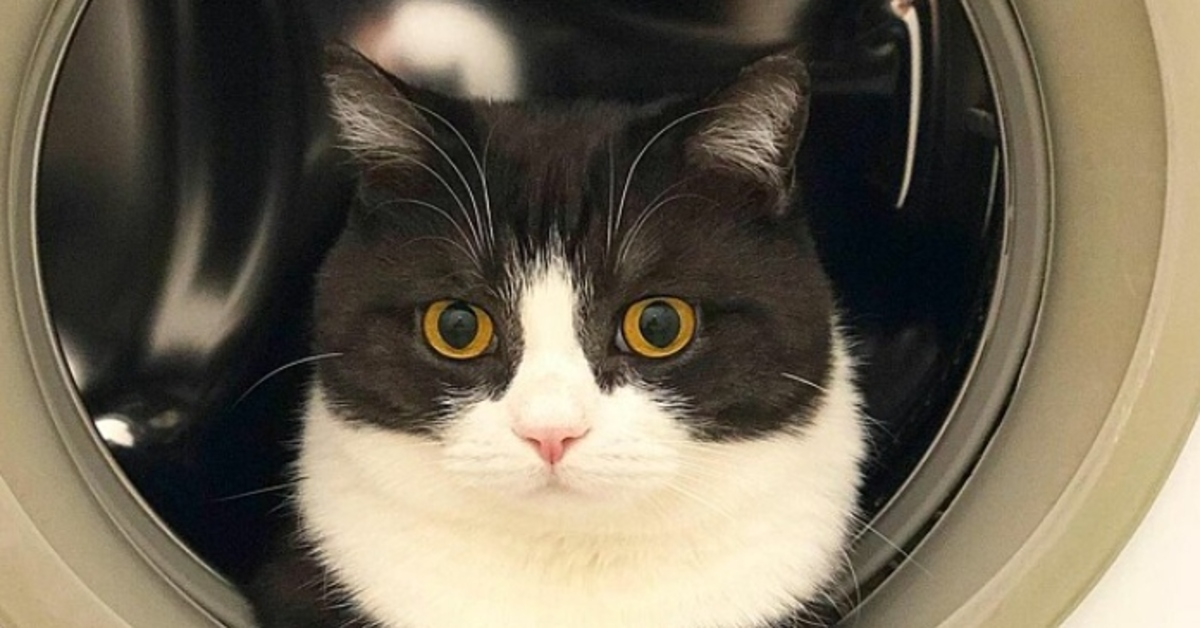 gattino Manchester neve video