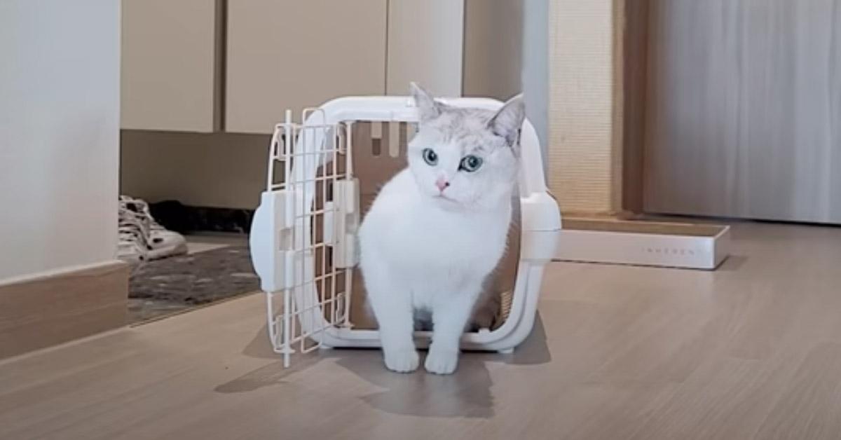 Gatto che esce dal trasportino