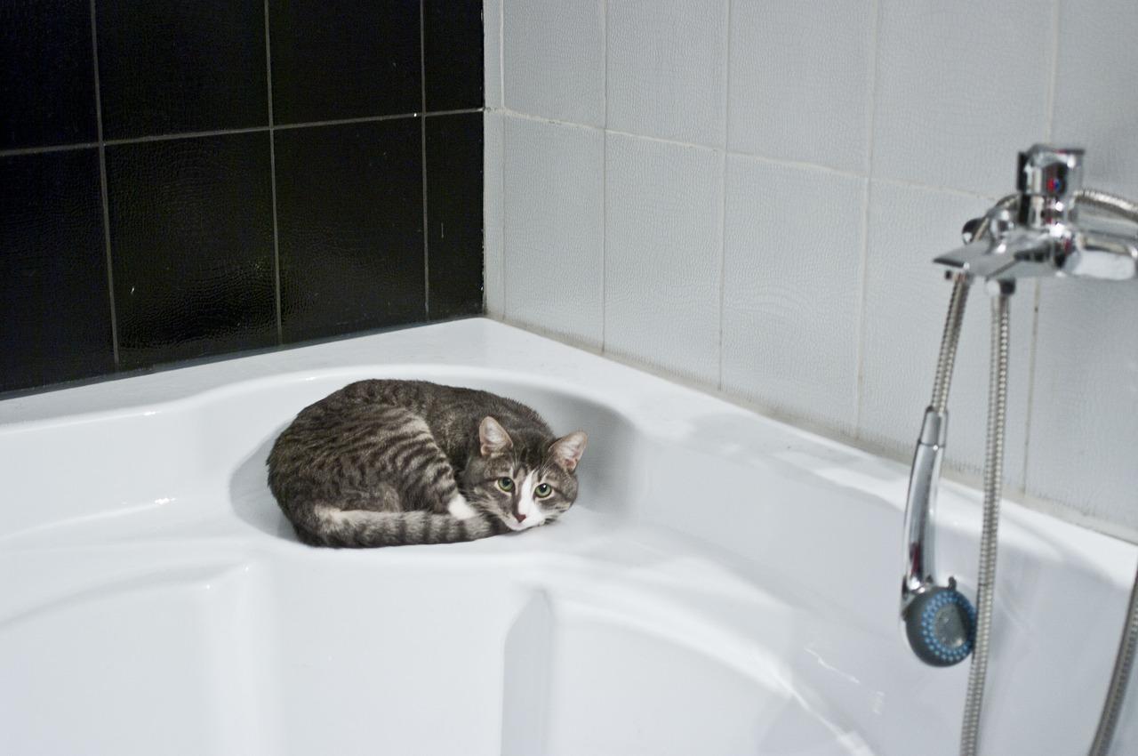 Perché i gatti ti inseguono in bagno