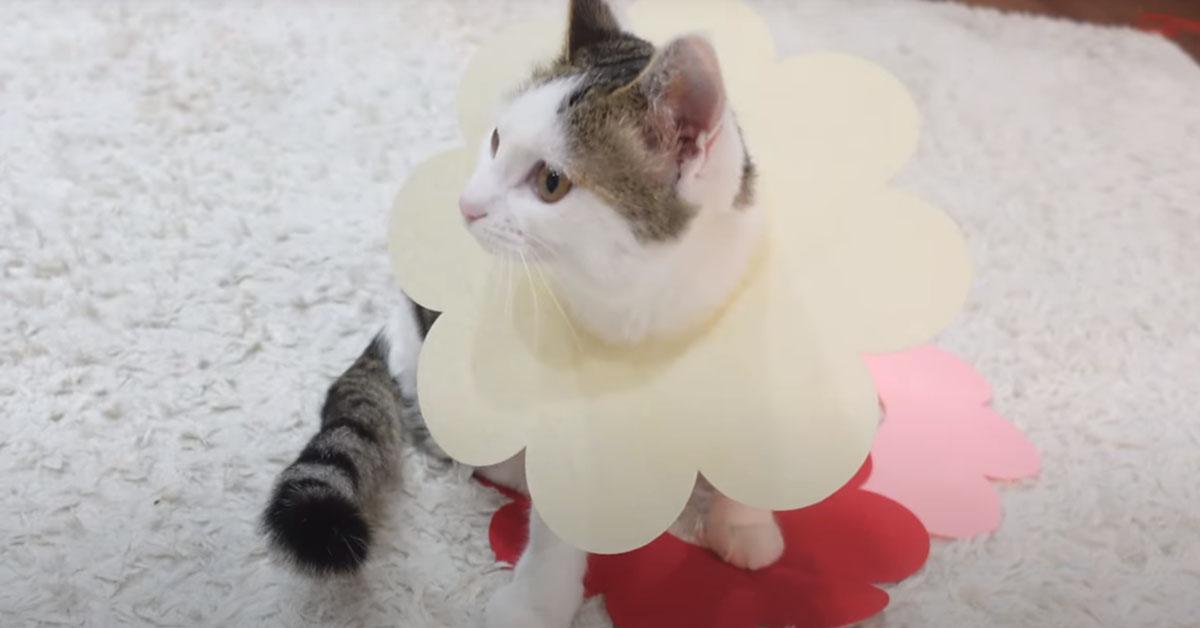 Gatto travestito da fiore
