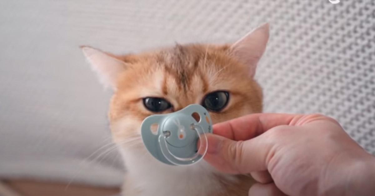 Gatto con un ciuccio
