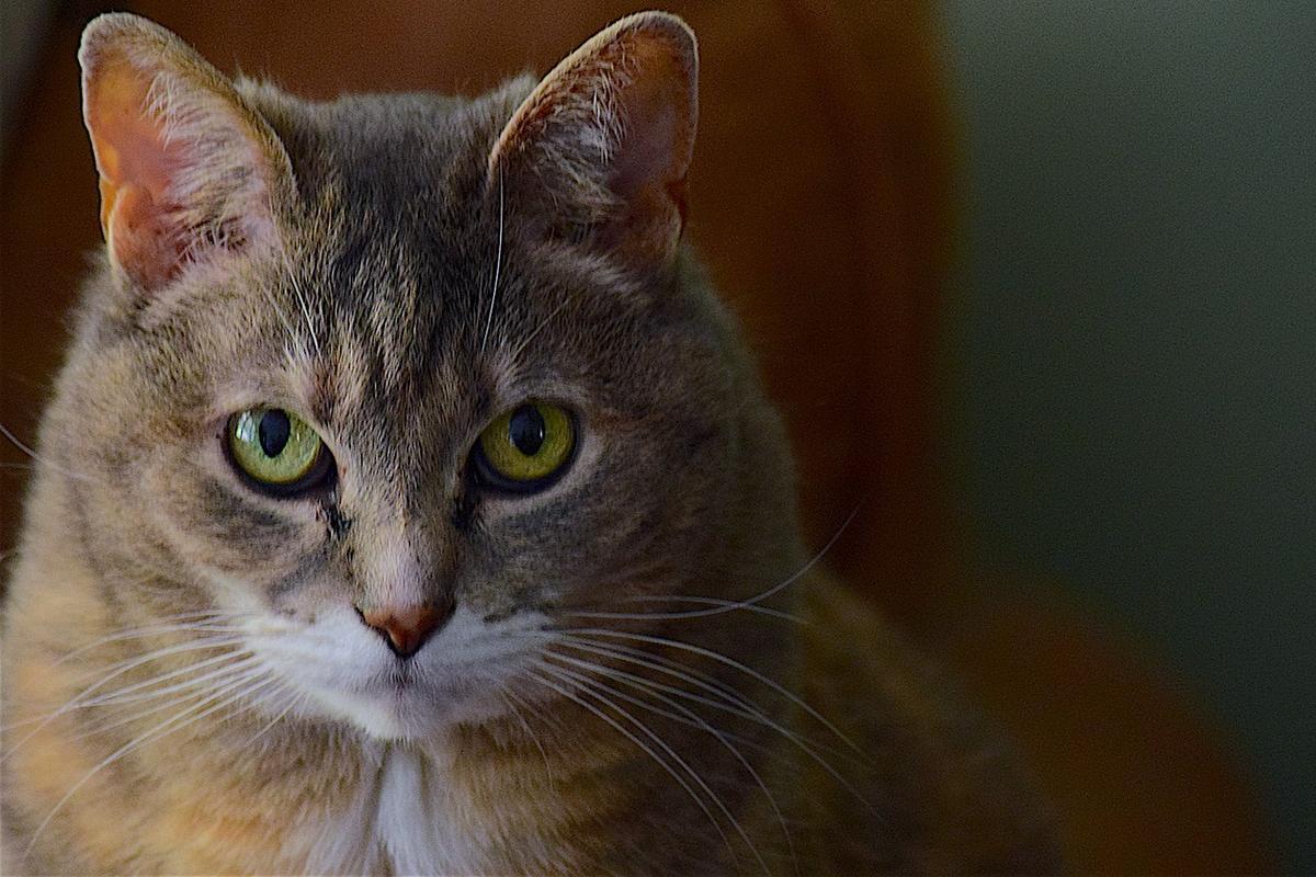 gatto che ti fissa