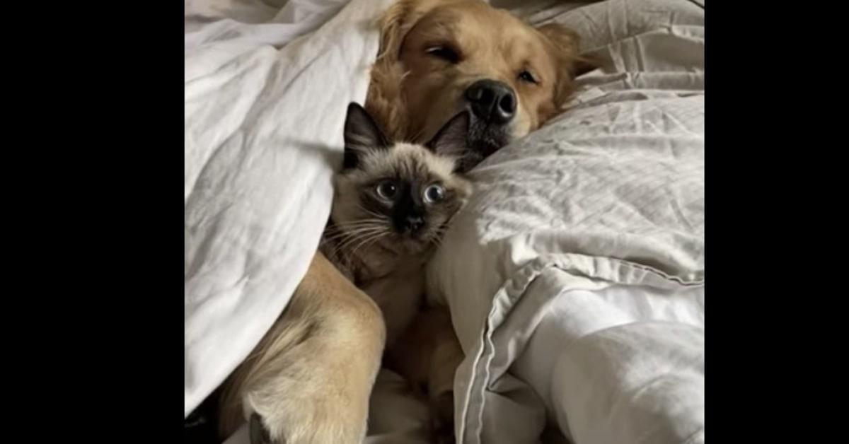 gattino e cane a letto insieme
