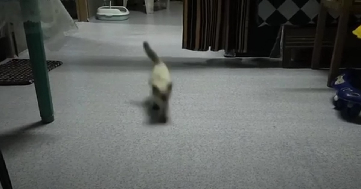 corsa sfrenata dei gattini che sentono il rumore dei croccantini