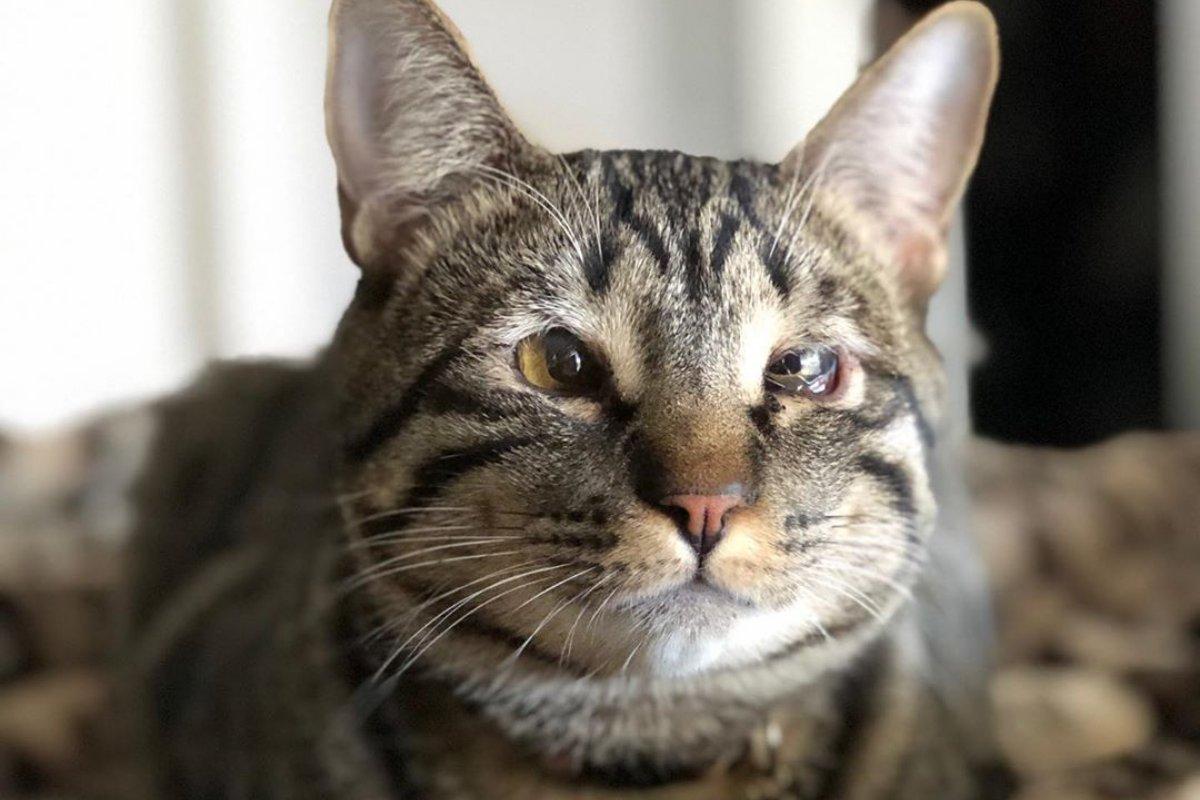 entropion nel gatto