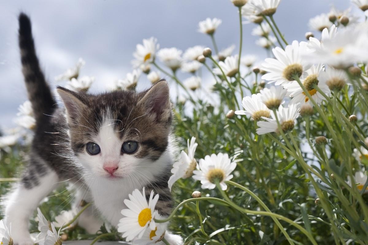 gatto e camomilla