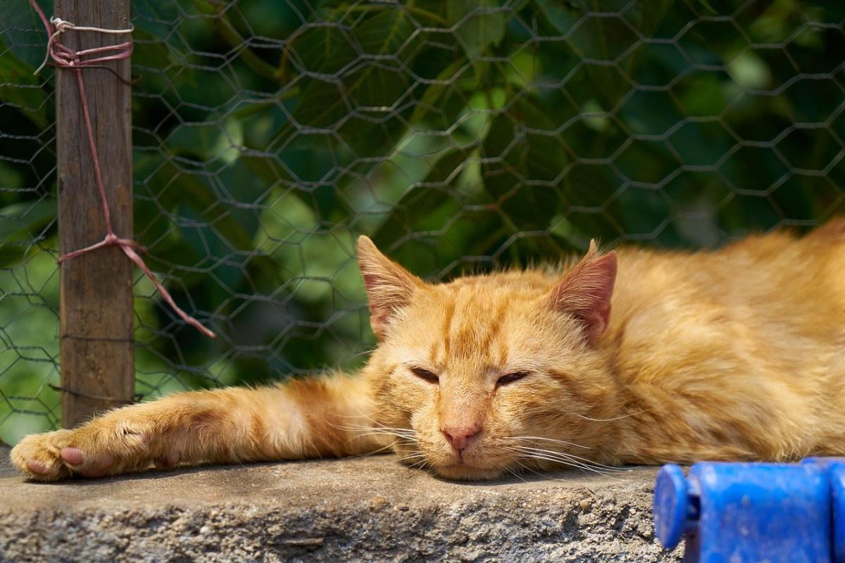 gatto arancione che dorme su un muretto
