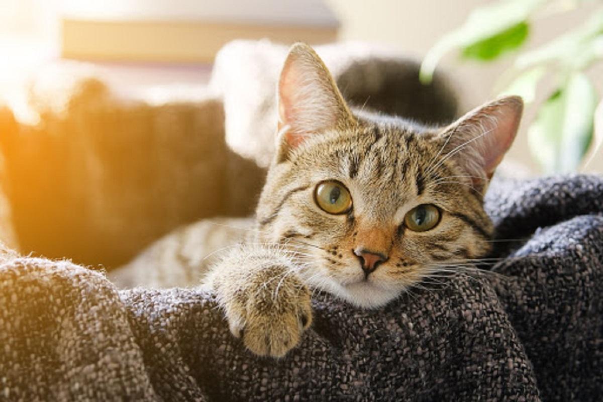 gattino in braccio