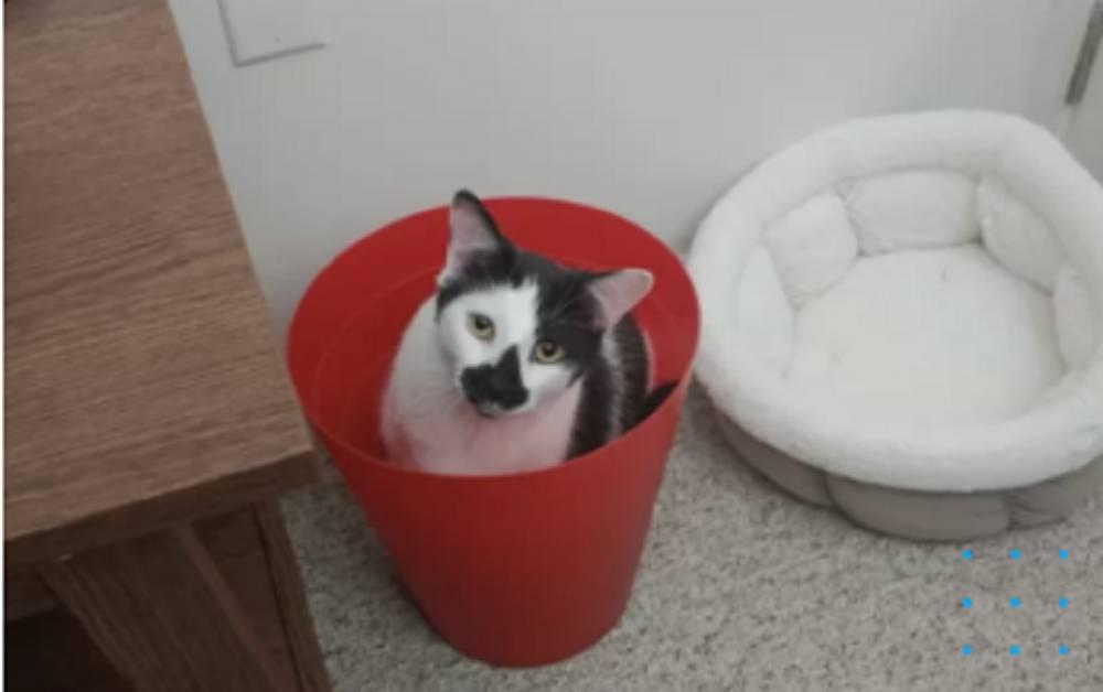 gatto nel secchio