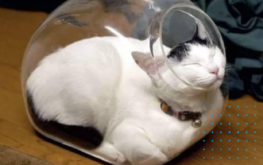 gatto nel barattolo