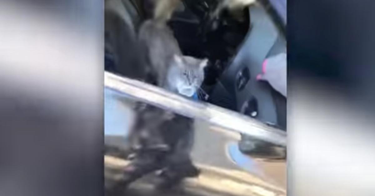 gatti in macchina giochi