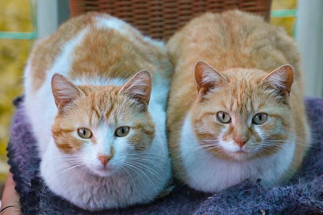 gatti in bagno