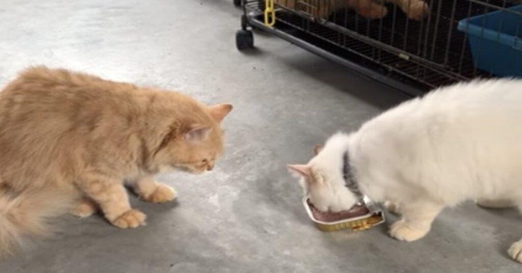 gatti non vogliono condividere cibo