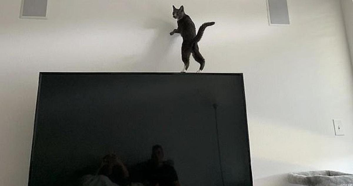 Gatto sulla TV