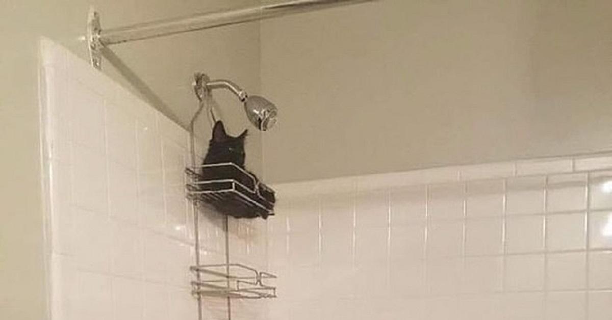Gatto in doccia