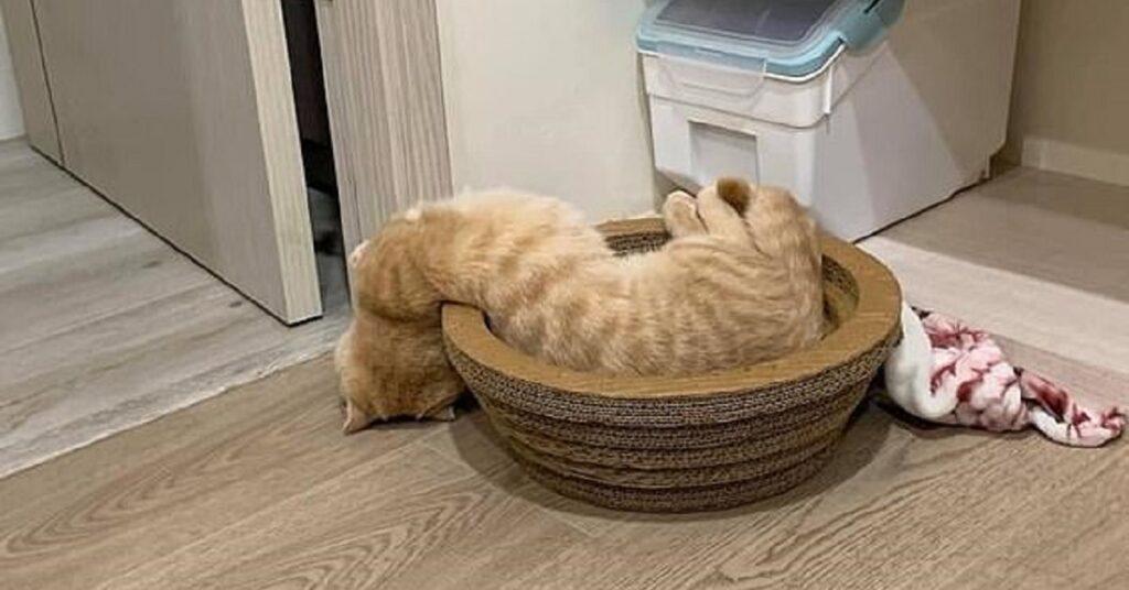 gatti malfunzionanti-gatto liquido